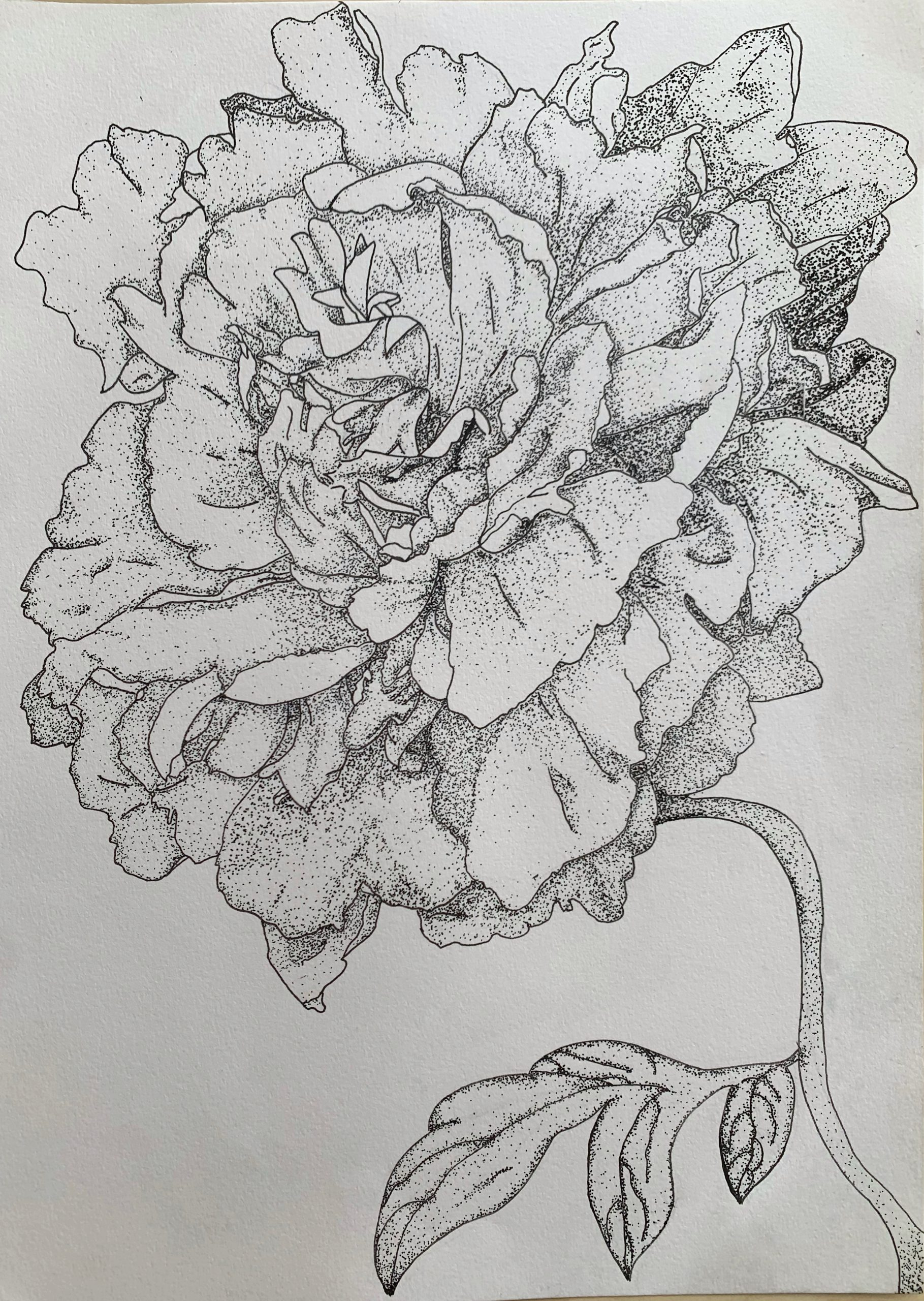 """Peony Therapy, Luz Quintero<br>8 x 10""""<br>Pen and Ink"""